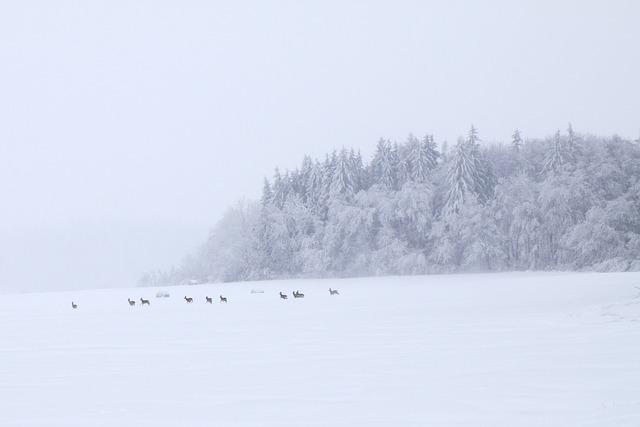 Roe, Animal, Cold, Deer, Doe, Field, Group, Herd
