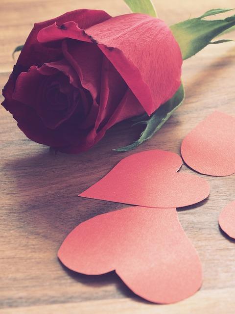 Flower, Rose, Desktop, Nature, Petal, Romance, Gift
