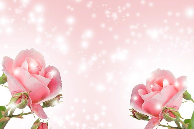 Flower Background, Flower, Nature, Romance, Summer