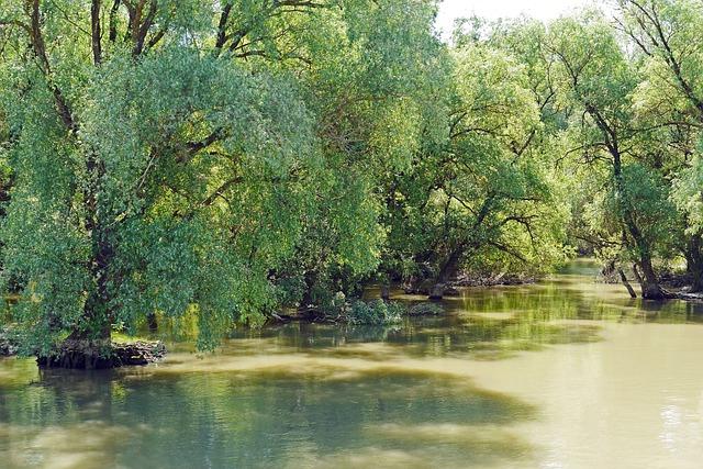 Romania, Danube Delta, Water Running, Muddy