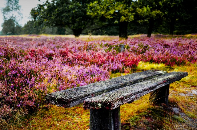 Bank, Heathland, Old, Romantic, Nature, Lonely