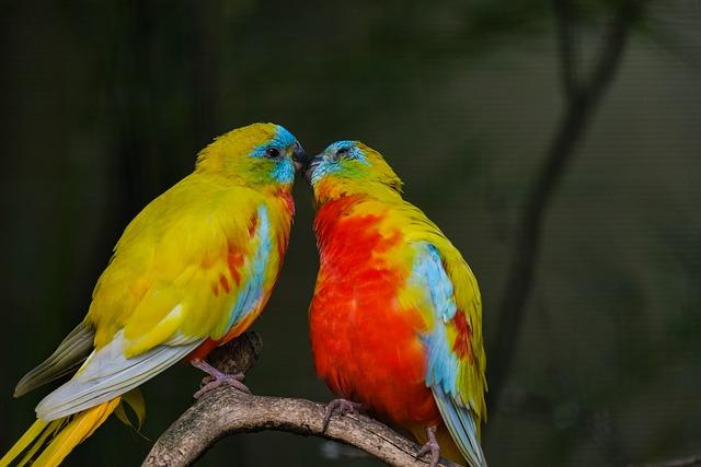 Beautiful Parakeet, Bird, Love, Kiss, Pair, Romantic