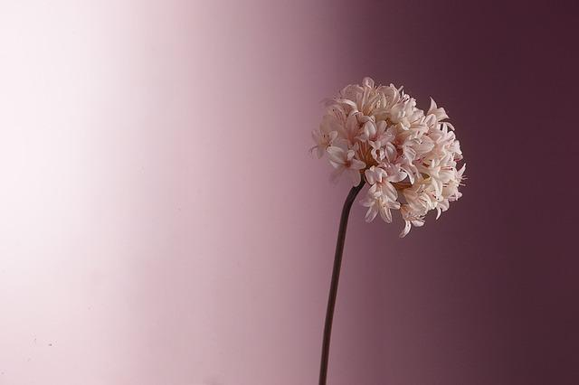 Flower, Pastel, Pretty, Pink, Floral, Romantic