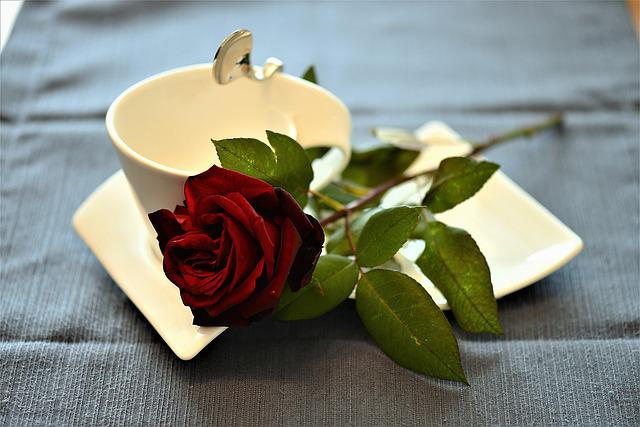Rose, Coffee Cup, Cover, Romantic, Festivity