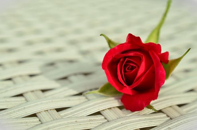 Rose, Red Rose, Romantic, Rose Bloom, Beauty, White