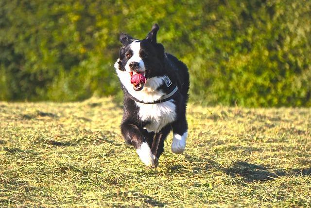 Dog, Run, Animal, Race, Fun, Fast, Dog Run, Pet, Romp
