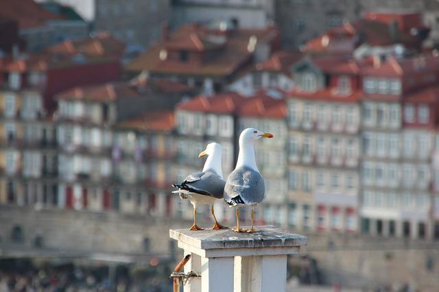 Gulls, Roof, Portugal, Porto, Architecture, Birds