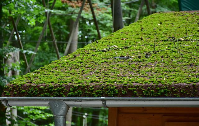 Roof, Brick, Moss, Roofing, House Roof, Tile Roof