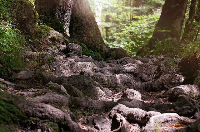 Away, Path, Root, Forest, Nature, Silent, Rest, Close