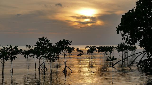 Mangroves, Sunset, Root, Water, Sea, Light, Clouds