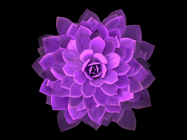 Mandala, Cactus, Flower, Nature, Rosa, Geometry