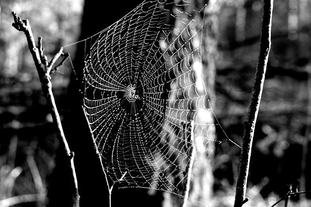 Cobweb, Hotel, Spider, Figure, Rosa