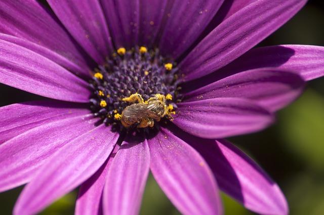 Pollen, Bee, Flower, Lilac, Rosa, Garden, Nature
