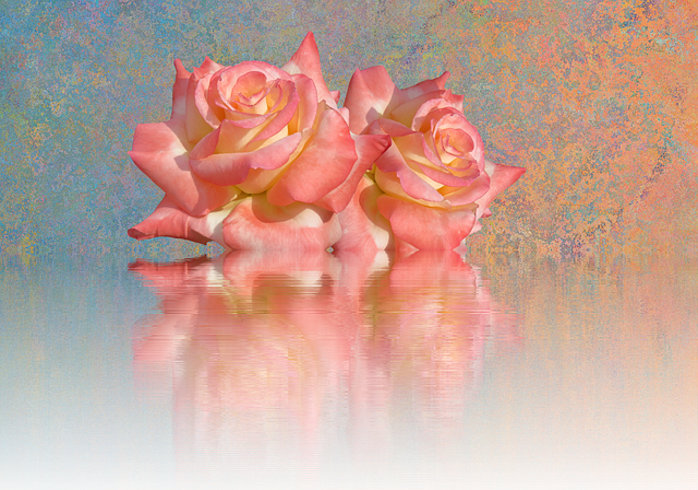 Roses, Love, Romantic, Valentine's Day, Rose Bloom
