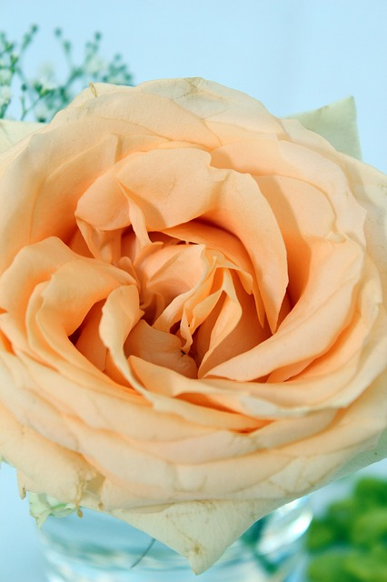Rose, Orange, Table Decoration, Floral Arrangement