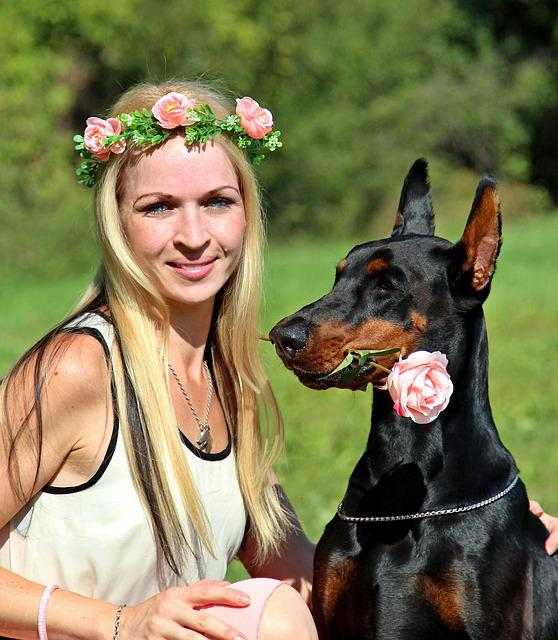 Blonde Woman, Doberman, Dog, Rose, Friendship, Love