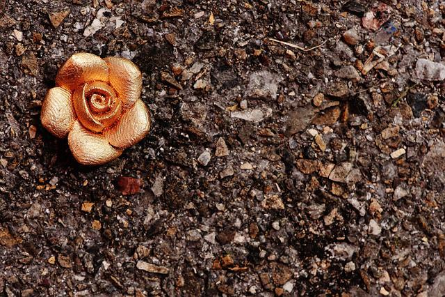 Rose, Gold, Blossom, Bloom, Beautiful