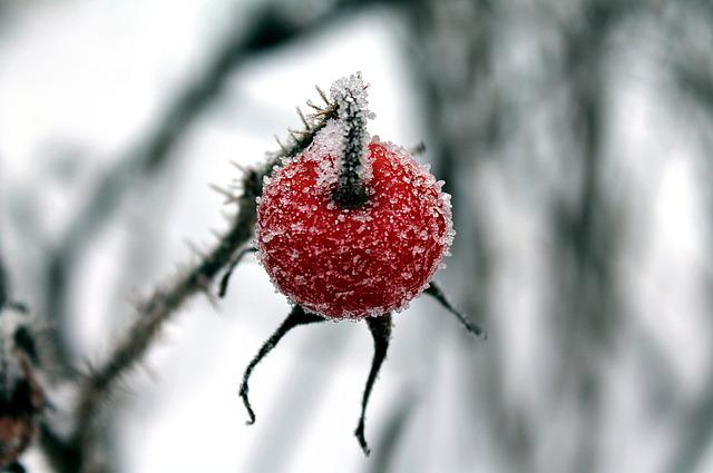 Winter, Rose Hip, Ice, Rose Hips, Ice Crystals