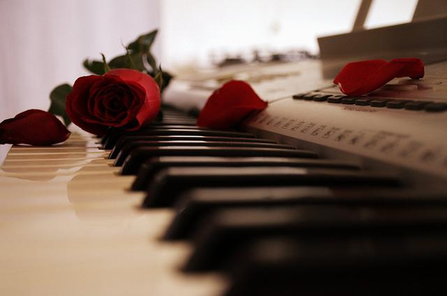 Piano, Rose, Keyboard, Passion, Petal