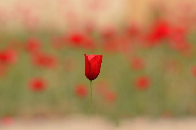 Flower, Flora, Nature, Petal, Rose, Beautiful, Floral