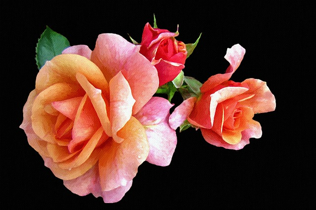 Painting, Canvas, Photo Painting, Rose, Still Life, Art
