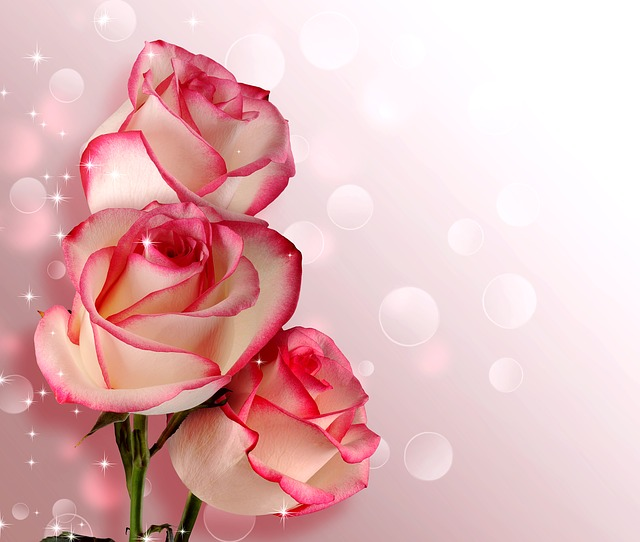 Flower, Rose, Petal, Romance, Love, Birthday, Wedding
