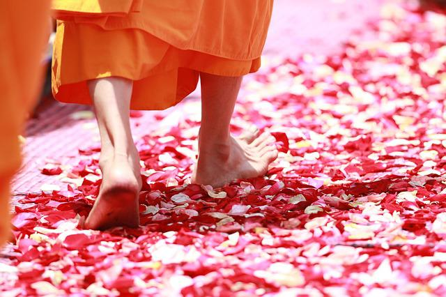 Monk, Walking, Rose Petals, Buddhism, Thailand