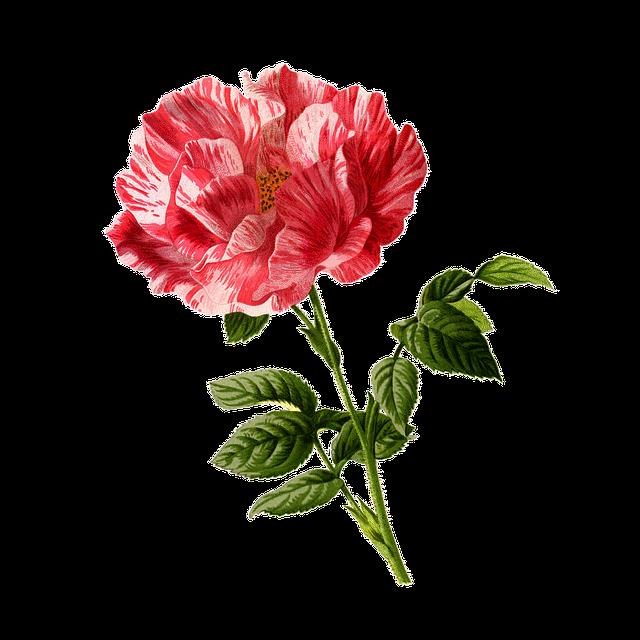 Rose, Flower, Vintage, Art, Cu Tout, Backless, Floral