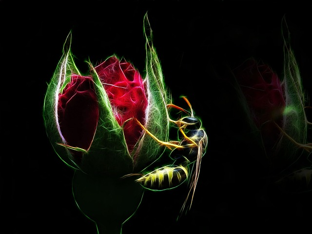 Fractalius, Wasp, Rose, Red Flower, Flower, Insect