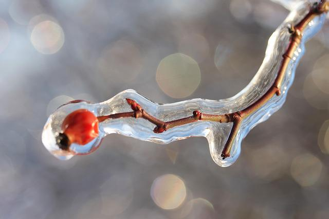 Rosehips, Ice, Winter, Crystal, Macro, Frost, Nature
