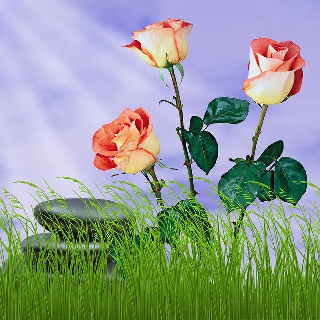 Flower, Nature, Summer, Plant, Garden, Spring, Roses