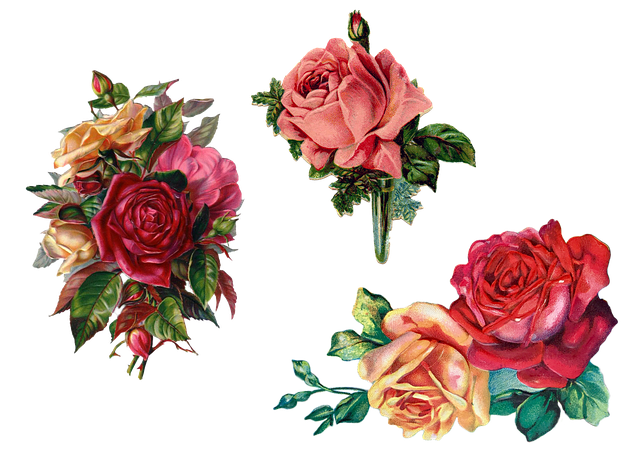Vintage, Roses, Bouquet, Isolated, Transparent