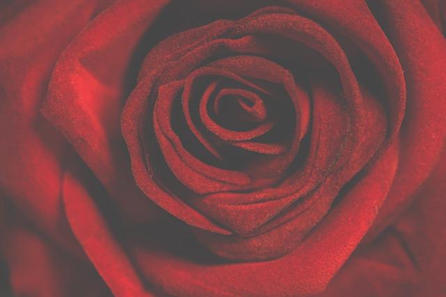 Roses, Romantic, Petal, Love, Desktop Background, Nice