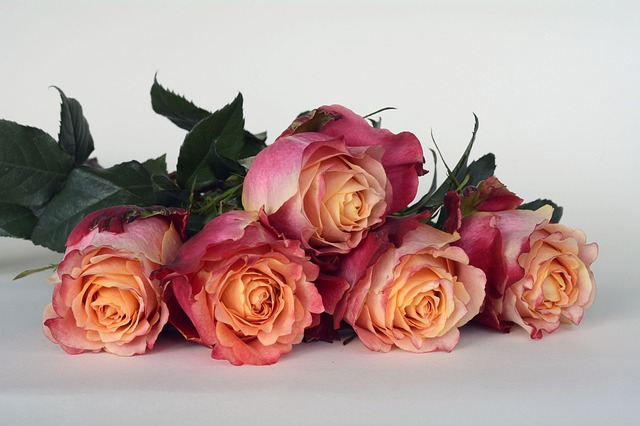 Roses, Flowers, Rose Flower, Romantic, Love, Fragrance