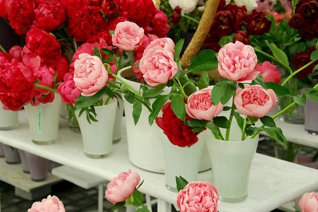Wild Rose, Roses, Open Rose, English Rose