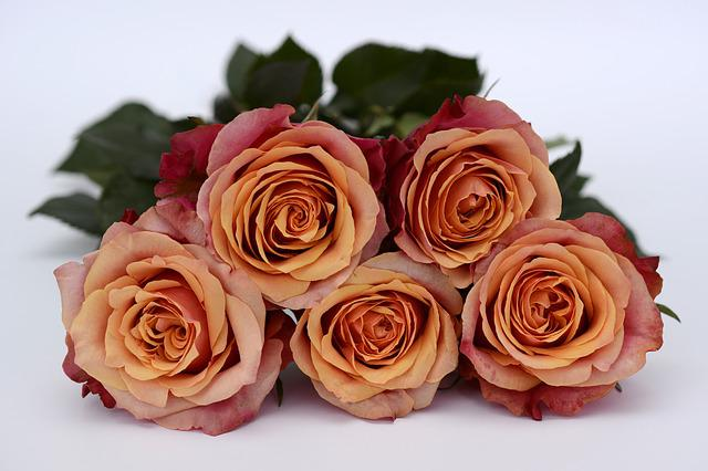 Roses, Orange, Rose Flower, Romance, Love, Flowers