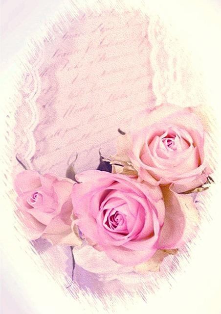 Romantic, Roses, Vintage, Dusky Pink, Rose Bloom