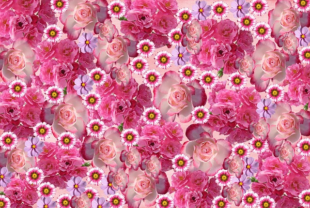 Roses, Flowers, Rose Blooms, Nature, Pink Rose, Love