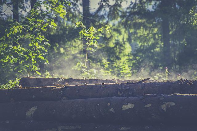 Forest, Wood, Log, Nature, Brown, Tree, Roughhouse