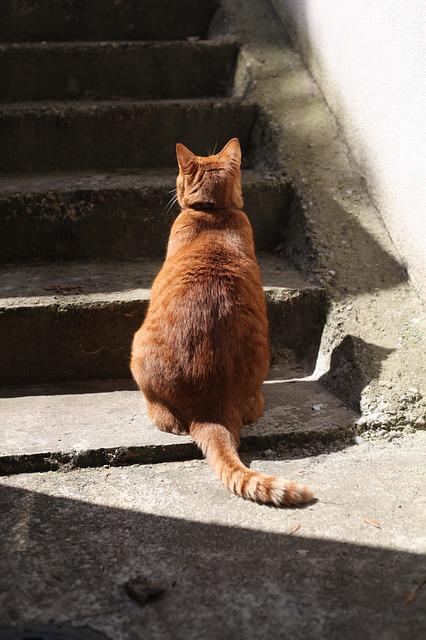 Cat, Roux, Staircase
