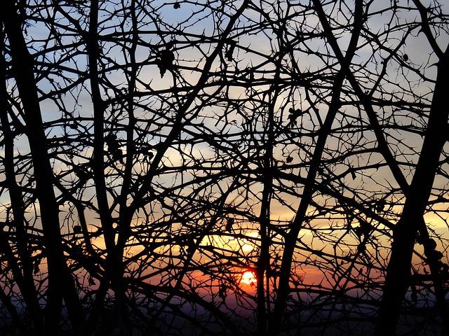 Rovi, Sunset, Season, Landscaping