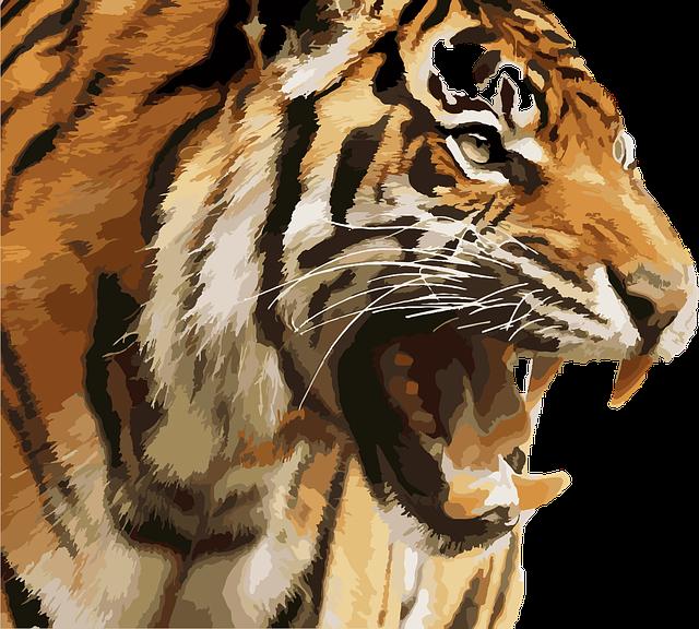 Tiger, Royal Tiger, National Park, Jungle, Predator
