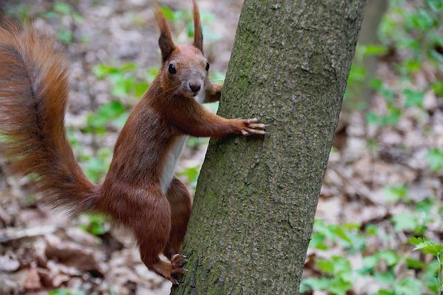 The Squirrel, Animal, Forest, Ruda, Nature, Animals