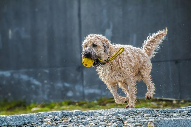 Dog, Run, Jump, Play, Race, Wet Dog, Wet, Animal, Romp