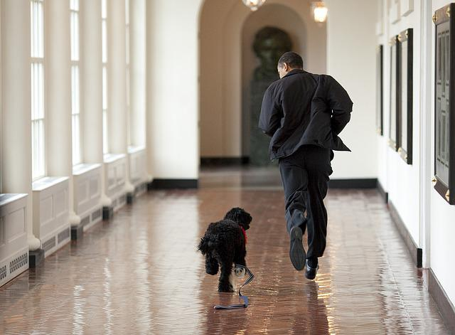 Barack Obama And Bo, Play, Run, Family Dog