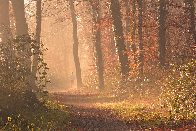 Fog, Forest, Autumn, Leaves, Jog, Run, Trees
