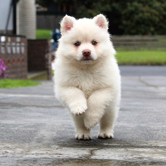 Puppy, Running, Dog, Animal, Pet, Cute, Young, Nature