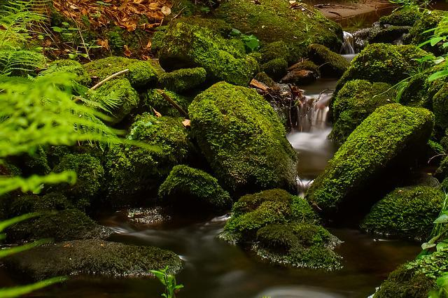 Forest, Stream, Trees, Running Water, Stones