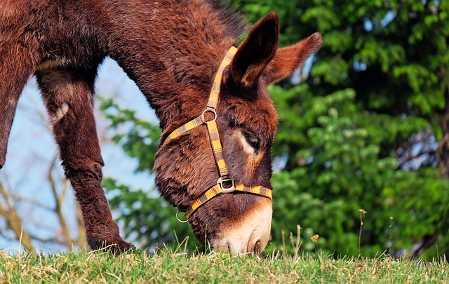 Donkey, Mule, Animal, Beast Of Burden, Nature, Rural