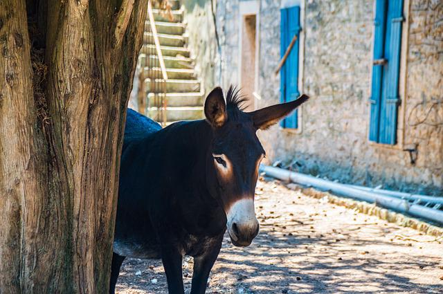 Donkey, Croatia, Home, Rural, Rustic, Farmhouse